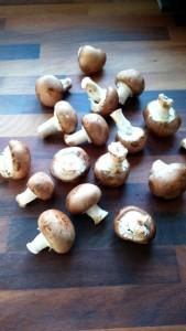 mushroomsx600