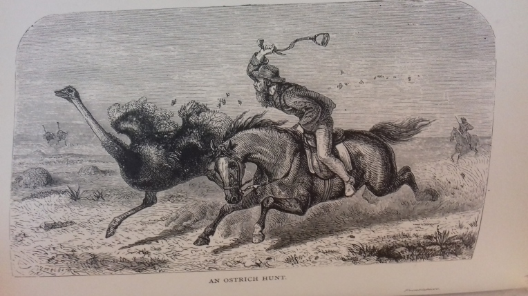 Man on horseback hunting a wild ostrich