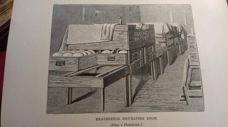An ostrich egg incubator