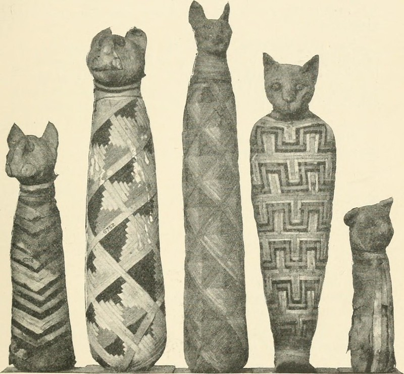 Photo of Egyptian cat mummies