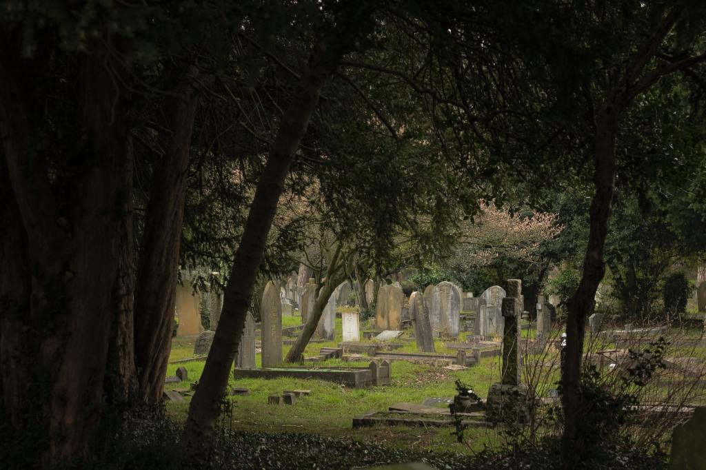 Yew trees looming over a graveyard